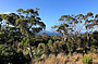 Views from your deck into the bushland and waterways